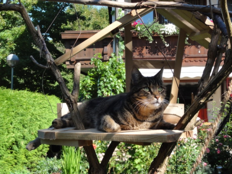Klettergerüst Für Katzen Selber Bauen : Katzen kratz relax baum bauanleitung zum selberbauen do