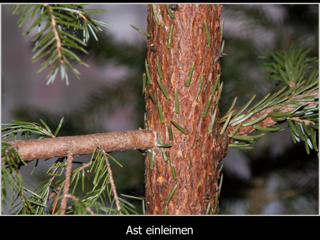 Weihnachtsbaum Ast.Christbaum Tuning Leichtgemacht Bauanleitung Zum Selberbauen 1 2